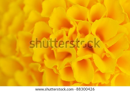 The yellow abstract flower background . - stock photo