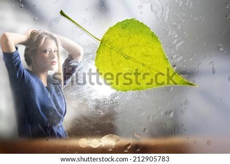 The yellow leaf stuck to a windowpane.  - stock photo