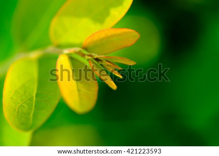 The young shoots of trees with green blur background - stock photo