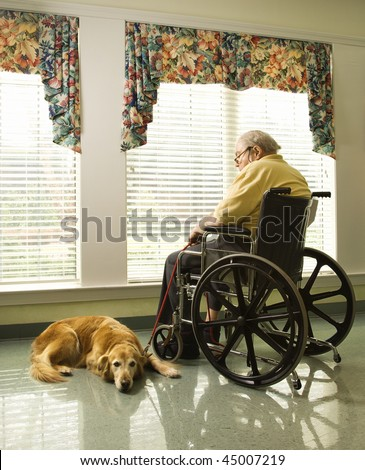 Therapy dog lying next to an elderly man in a wheelchair who looks out a window. Vertical shot. - stock photo