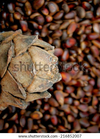 There are brown natural cedar nuts and cone. Closeup. - stock photo