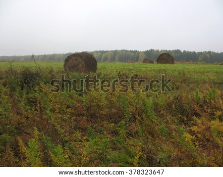 There are haystackes, autumn field and foggy forest - stock photo