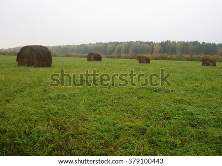 There are haystackes, foggy autumn forest  and field of green grass - stock photo