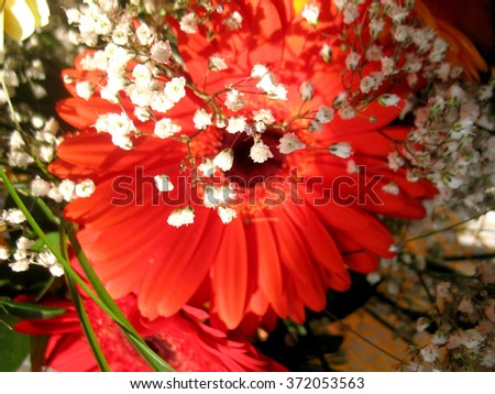 There are red flowers (gerbera) and green grass - stock photo
