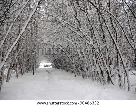 There are winter snow covered trees, snow snowdrift and alley - stock photo