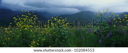 These are spring wildflowers under a stormy sky. - stock photo