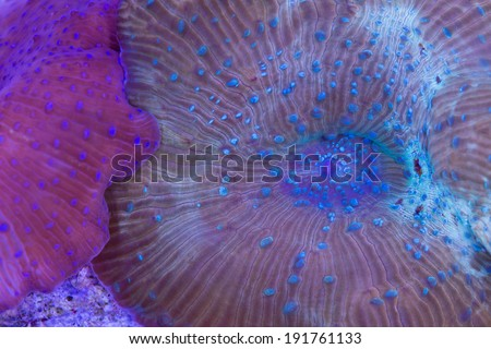 These are two mushroom polyps on a rock. - stock photo