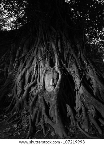 TheStone budda head traped in the tree roots Ayudthaya Thailand. - stock photo