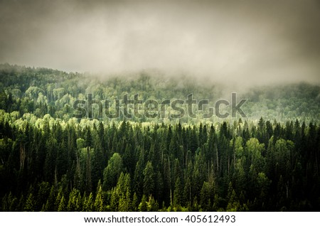 thick fog covered with thick coniferous forest  - stock photo