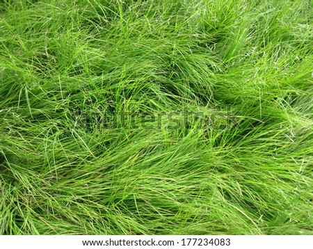 Thick grasses on the side of the Appalachian Trail in the Great Smoky Mountains National Park - stock photo