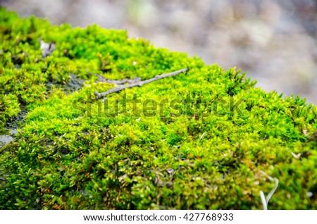 Thick green moss settled on a tree trunk. Forest on a tree trunk. - stock photo