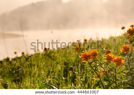 thick morning fog in the summer forest.  thick morning fog in the forest at pond. dense fog in the morning. forest hiding in the fog. on a green lawn in the early foggy morning.  - stock photo