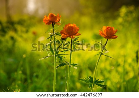 thick morning fog in the summer forest. thick morning fog in the forest at pond. Morning landscape in summer thick fog.dense fog in the morning. early morning. forest hiding in the fog.orange flowers  - stock photo