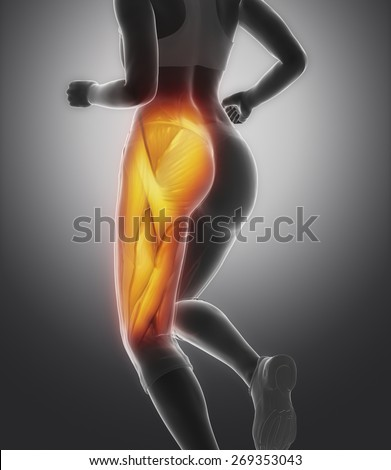 Thigh muscle female anatomy - stock photo