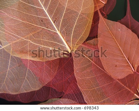 Thin dried leaves- unique - stock photo