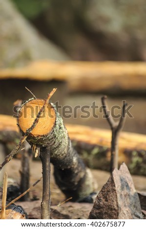 Thin log in the forest - stock photo