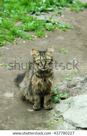 Thin shaggy gray cat looking for a home - stock photo