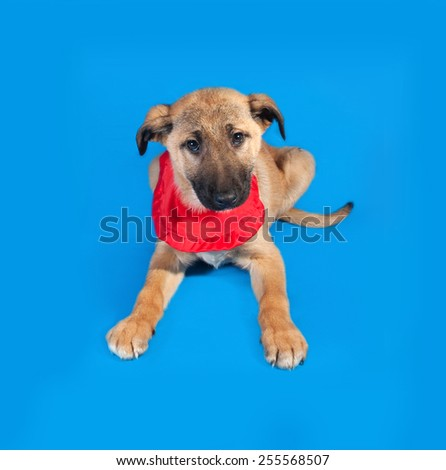 Thin yellow puppy in red bandanna sitting on blue background - stock photo