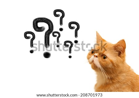Thinking cat with questions mark above against white background - stock photo