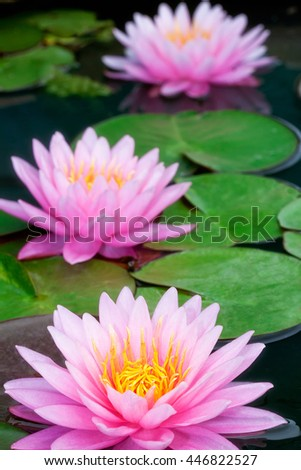 This beautiful waterlily or lotus flower is complimented by the rich colors of the deep blue water surface. Saturated colors and vibrant detail make this an almost surreal image, Bangkok, Thailand - stock photo
