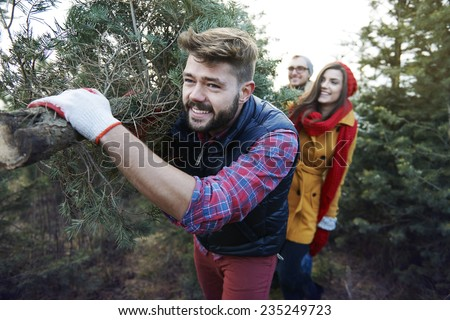 This Christmas tree is big and so heavy - stock photo