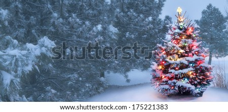 This decorated outdoor snow covered Christmas Tree glows brightly on this foggy Christmas morning.  - stock photo