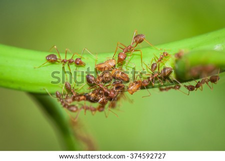 This event shows the unity of the ants. - stock photo