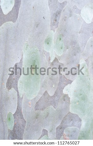 This image shows the detail of eucalyptus tree bark - stock photo