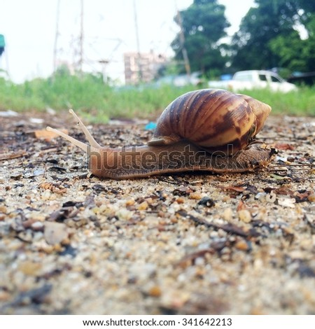 This is a small world of snail - stock photo
