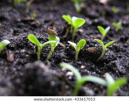This is spring young sprout of plant - stock photo