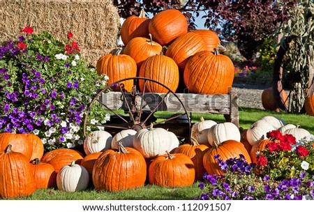 This is white and orange pumpkins in an autumn or fall still life display, with flowers, a rustic wagon wheel and bails of hay, perfect for a seasonal image. - stock photo