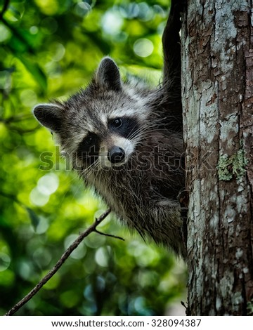 This little guy was first fleeing up on a tree in the forest, but was then very curiously observing me from his save place. - stock photo