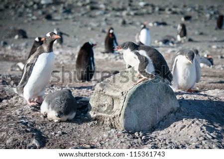 This shot was made during expedition to Antarctica in January 2012. - stock photo