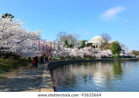 Thomas Jefferson Memorial during cherry blossom festival in Washington DC United States - stock photo