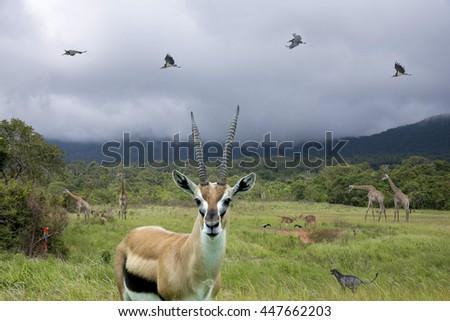 Thomson's gazelle ,Chital deer, Giraffe, Black panther, Lesser adjutant stork in national park - stock photo