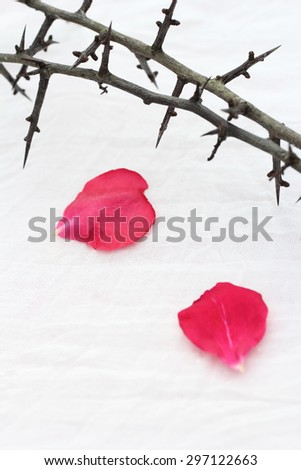 Thorns against white fabric and red rose petals, Christian background. - stock photo