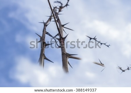 Thorns on the sky 2. - stock photo