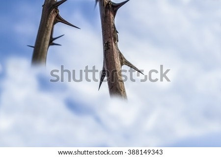 Thorns on the sky 5. - stock photo
