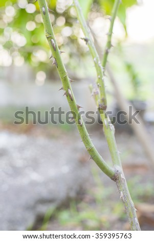Thorns (Selective Focus) - stock photo