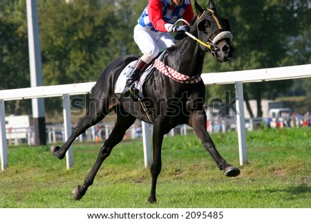 Thoroughbred galloping, just one leg on the ground - stock photo