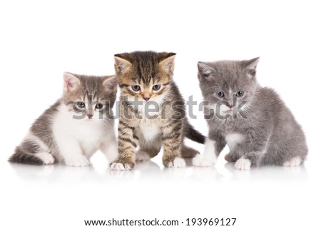 three adorable kittens - stock photo