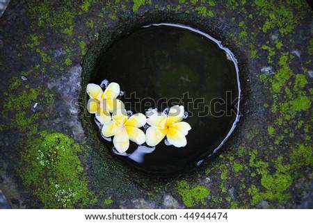 three beauty yellow flower in stone ancient vase - stock photo