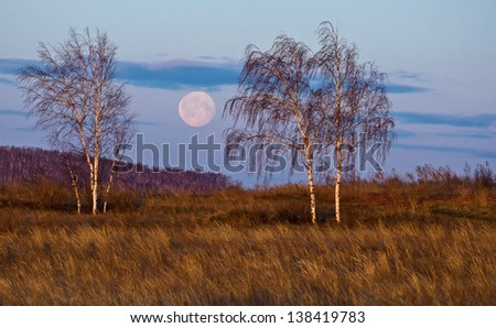 Three birch trees on a hillside illuminated by the light of the rising sun on a big moon - stock photo