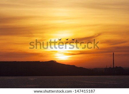 Three birds flying over the morning Sun in Tampa (Florida). - stock photo