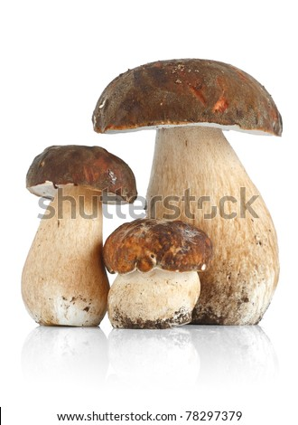 Three Boletus Edulis mushrooms over white background - stock photo