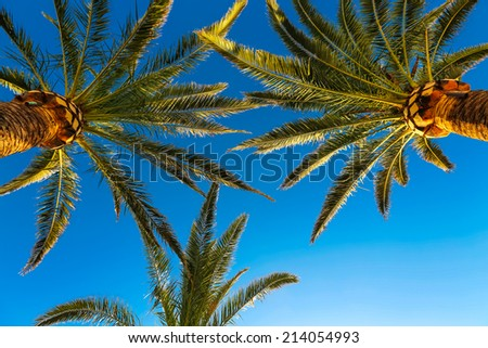Three branches of palm trees against the sky - stock photo