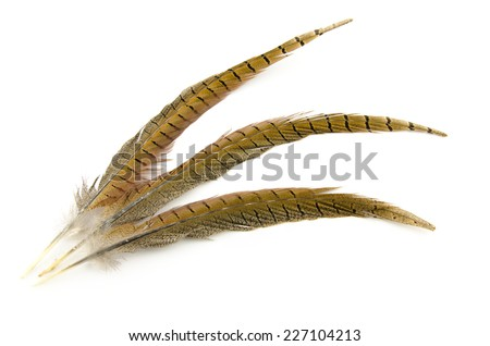 three brown feathers isolated on white - stock photo