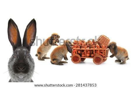three brown rabbits vnut carrots - stock photo