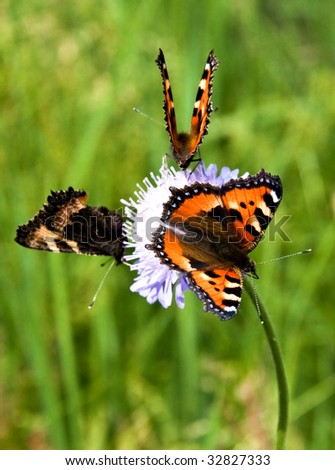 Three butterflies on a flower - stock photo