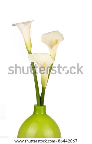 Three Calla lilies in a green pot - stock photo